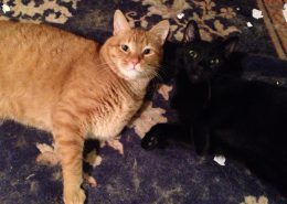 Harry and Evie - adopted cats