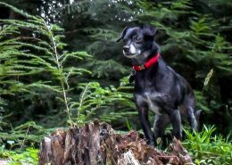 Molly - adopted dog