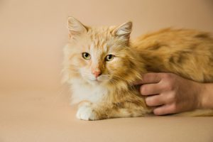 Report Animal Abuse | Blue Ridge Humane Society | Hendersonville, NC