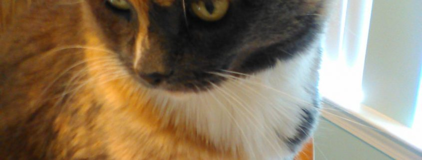 c78b8861fd227b Tickles Special Needs Found her a Special Person - Blue Ridge Humane ...