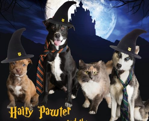 Cats and dogs dressed in Harry Potter theme promoting reduced adoption rates