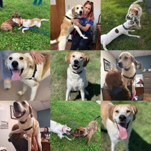 Collage of 9 photos of white and light tan dog