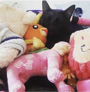 Black cat cuddling with stuffed animals