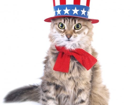 Tabby cat dressed in a stars and stripes hat and red bow tie