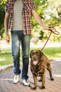 Brown dog on leash walking on a stone path