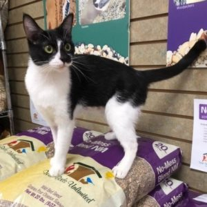 Black and white cat standing on a stack of bird food in bags