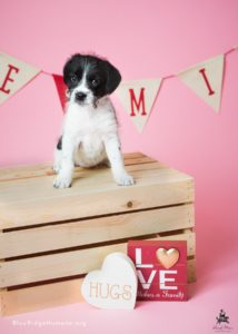 Black and white puppy sits on a box with Valentine's decorations in the background