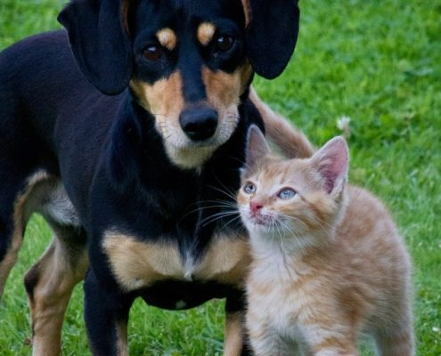 black dog and orange kitten stand next to each other
