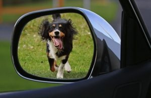 view of a dog running after a car from the side view mirror