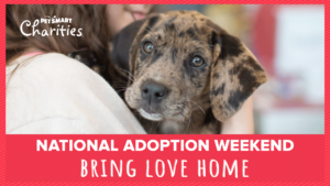 Petsmart national adoption weekend