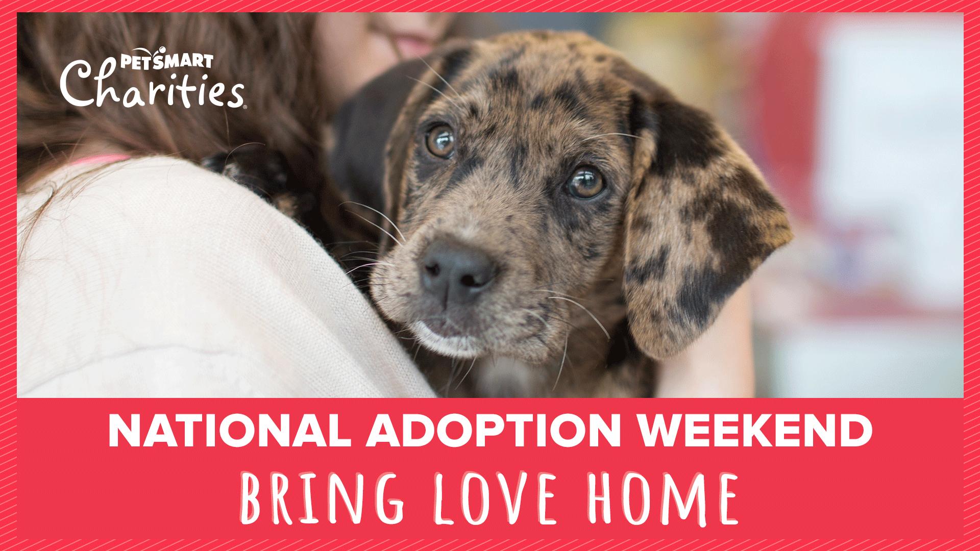 National Adoption Weekend At Petsmart Hendersonville Saturday Blue Ridge Humane Society