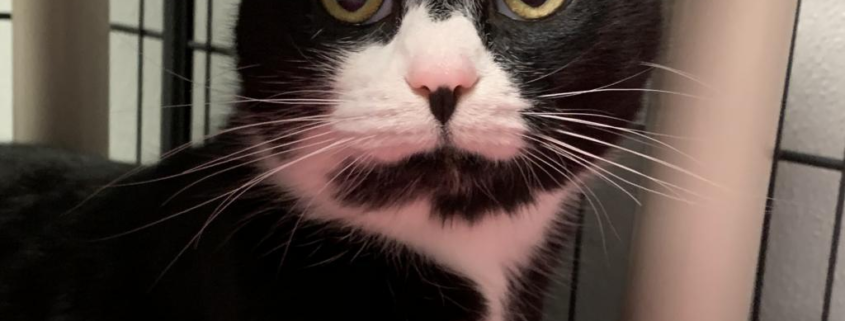 black cat with white nose