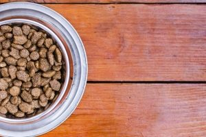 bowl of dog food on a wooden floor