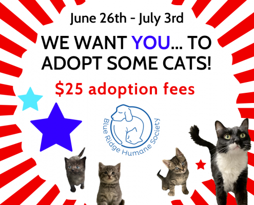 Cat adoption promo flyer