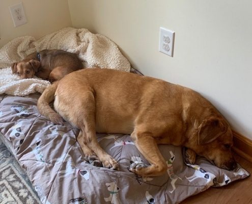 small brown dog and large brown dog sleep together on a bed on the floor