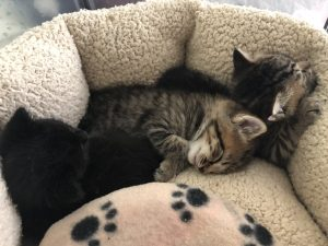 group of kittens sleeping