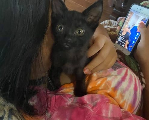 a small black kitten snuggles on the shoulder of a women sitting on a couch