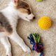 a brown and white puppy lays on tje floor asleep surrounded by dog toys