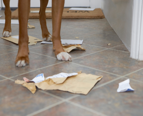 View of a dogs feet with torn pieces of paper spread around