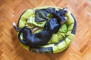 a black dog with floppy ears lays on a green dog bed