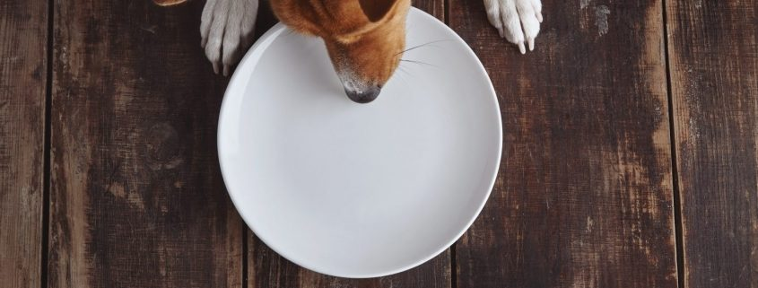 an overhead view of a dog tryin g to eat from an empty plat on a wooden table