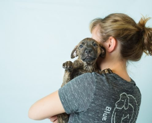 a puppy with it's face towards the camera is held by a women facing away from the camera