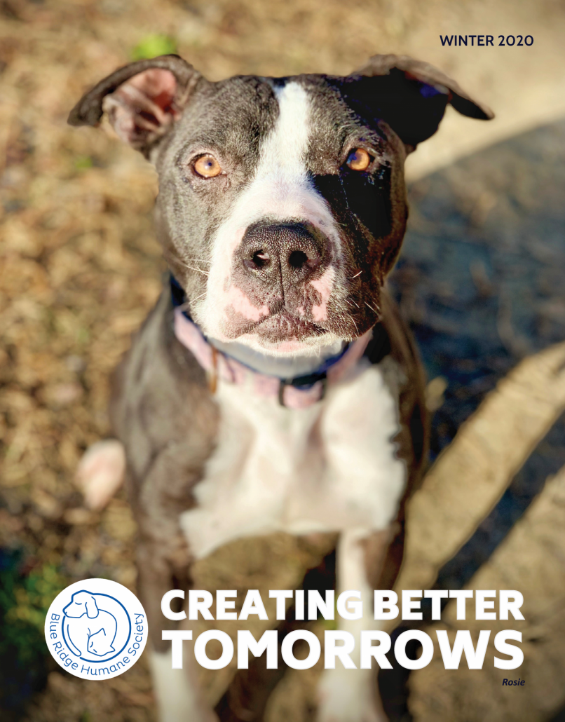cover of winter newsletter featuring a black and white dog sitting on the ground