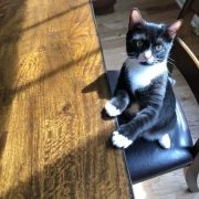 A black and white cat sits at a wooded table on a black chair