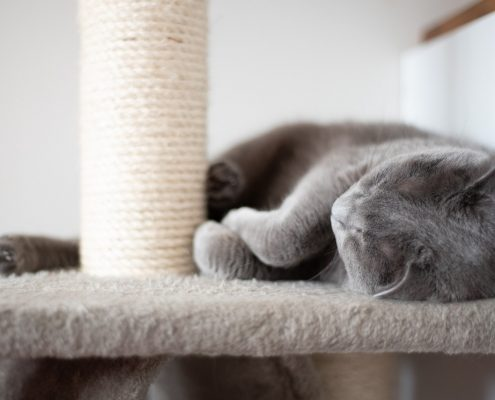 a grey cat lays on a carpet platform with a rope scratching post next to it