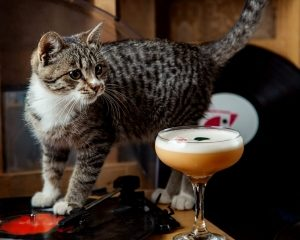 A grey tabby cat stands on a counter next to a mixed cocktail