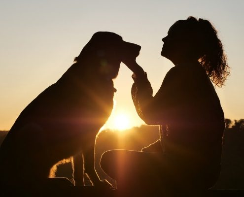 silhouette of a large dog sitting facing a woman