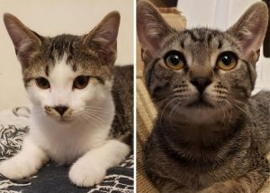 Side by side images of a white and brown kitty and a brown kitty
